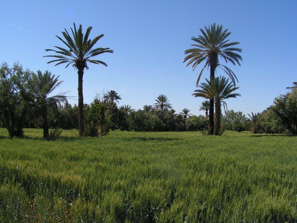 la palmeraie de skoura