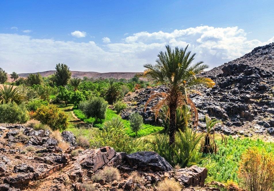 oasis de sidi flah skoura